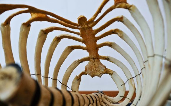 Operacja kręgosłupa